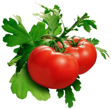 khasiat_buah_tomat