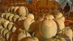 Bisnis manis dari melon ladika